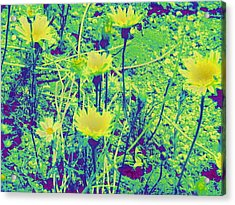 Happy Desert Daisies Acrylic Print by Claire Plowman