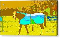 Happy Horse Pop Art Acrylic Print by Artyzen Studios