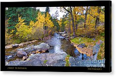 Happy Place In The Woods Panorama Poster  Acrylic Print by James BO  Insogna
