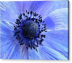 Harmony Blue Acrylic Print by Mim Eisenberg