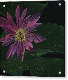 Hawaiian Water Lily - Pink Acrylic Print by Sherry Robinson