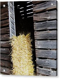 Hay-day Acrylic Print by Todd Sherlock