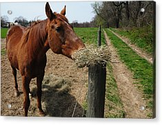 Hay Is For Horses Acrylic Print by Bill Cannon