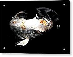 Headless Koi Acrylic Print by Don Mann