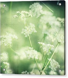 Hedgerow Blossom In Spring Acrylic Print by Nichola Sarah