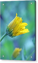 Hello World Acrylic Print by Becky Lodes