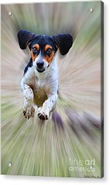 Here I Come Acrylic Print by Debbie Portwood