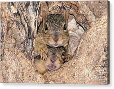 Hey I Cant See Acrylic Print by Lori Tordsen