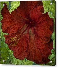 Hibiscus Plus Fern Acrylic Print by Barbara Middleton