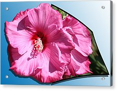 Hibiscus Acrylic Print by Shane Bechler