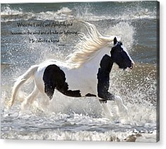 Hooves On The Wind Acrylic Print by Terry Kirkland Cook