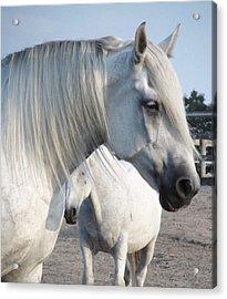 Horse-15 Acrylic Print by Todd Sherlock