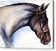 Horse Head 5 Acrylic Print by Leyla Munteanu