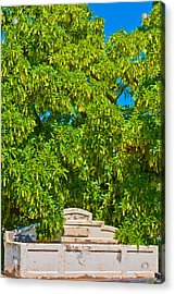 Horses No Longer This Way Come Acrylic Print by Paul Donohoe