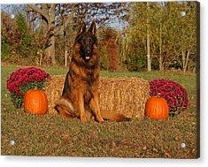 Hoss In Autumn II Acrylic Print by Sandy Keeton