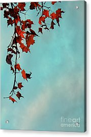 Hot And Cold Acrylic Print by Aimelle