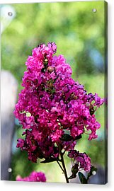 Hot Pink Acrylic Print by Toni Hopper