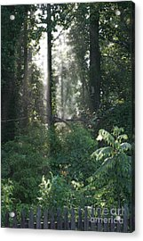 Humid Acrylic Print by Cris Hayes