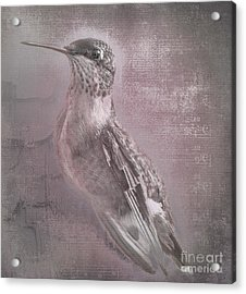 Hummer Portrait Acrylic Print by Cris Hayes