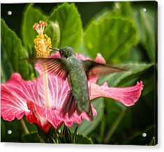 Hummers In The Garden Five Acrylic Print by Michael Putnam