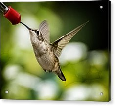 Hummers In The Garden Two Acrylic Print by Michael Putnam
