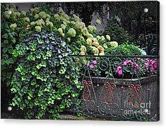 Hydrangeas Salzburg Acrylic Print by Mary Machare