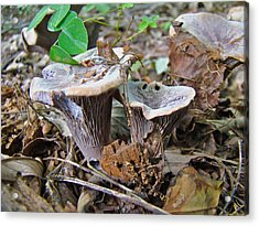 Hygrophorus Caprinus Mushrooms Acrylic Print by Mother Nature