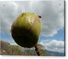 Hymenoptera Acrylic Print by Juan Francisco Zeledon