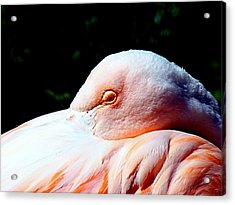 I See You Acrylic Print by Nick Kloepping