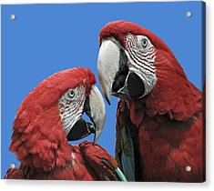 Acrylic Print featuring the photograph I Told You So by Rodney Campbell