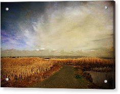 If I Could See Into The Future Acrylic Print by Laurie Search