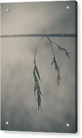 If You Lost Your Love For Me Acrylic Print by Laurie Search