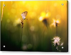 Imagine Acrylic Print by Yustus Waskito Budi P