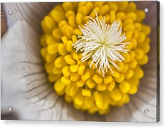 In Close Acrylic Print by Mike Hendren