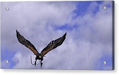 In Coming Acrylic Print by Richard Lee