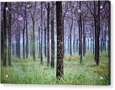 In Front Acrylic Print by Victor Bezrukov