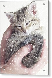 In Safe Hands II Acrylic Print by Amy Tyler