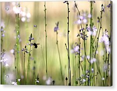 In The Field - Cards Acrylic Print by Travis Truelove