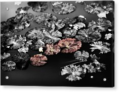 In The Pond Acrylic Print by Bonnie Bruno