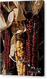 Indian Corn Acrylic Print by Susan Herber