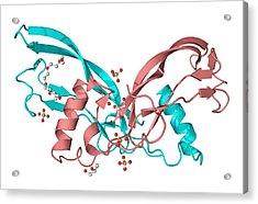 Inhibin Beta A Molecule Acrylic Print by Laguna Design