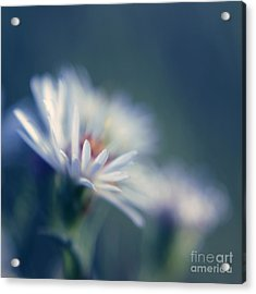 Innocence 03b Acrylic Print by Variance Collections
