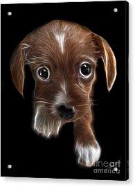 Innocent Loving Eyes Acrylic Print by Peter Piatt