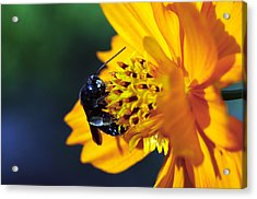 Insect And The Wild One Acrylic Print by Wanda Brandon