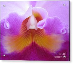 Inside An Orchid's Heart Acrylic Print by Judee Stalmack