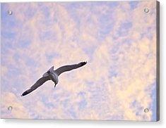 Into The Wind Acrylic Print by Priya Ghose