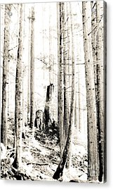 Into The Woods Acrylic Print by Kevin Barske