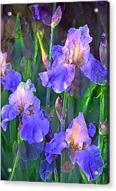 Iris 51 Acrylic Print by Pamela Cooper