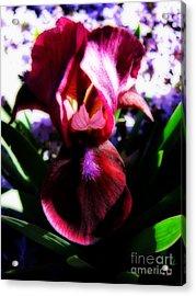 Iris Inner Beauty Acrylic Print by Ms Judi