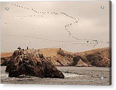 Islas Ballestas - Peru Acrylic Print by Andrea Cavallini